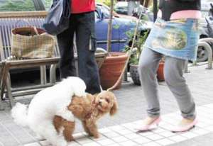 为什么要阻止狗狗爬跨?