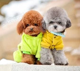 常见的小型犬有哪些?